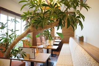 週替わりランチが人気のカフェ(新潟県新潟市中央区)